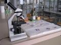 Il laboratorio di chimica e fisica Dei licei classico e scientifico